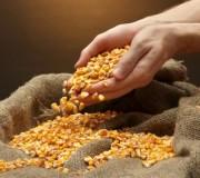 syngenta-corn-lawsuit